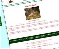 European beavers