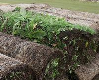 Wild flower turf rolls