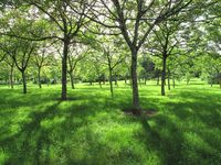 walnut groves near bergerac france