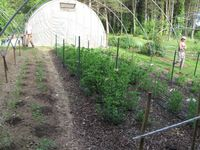plant production area and poly tunnel