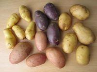 Sarpo potato