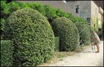Hedge cutting costs