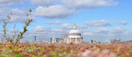 Green roof in sight of St Pauls