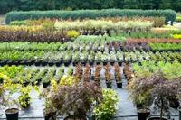 T&S plants