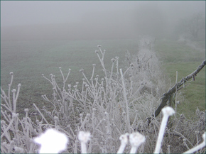 Frost_022_copy