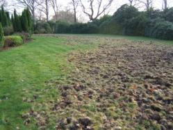 How Do You Stop Badgers Digging Up The Lawn