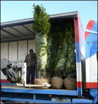 Transporting_trees_and_shrubs